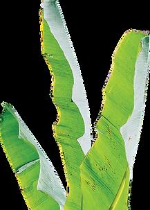 Cutout of banana tree leaves.