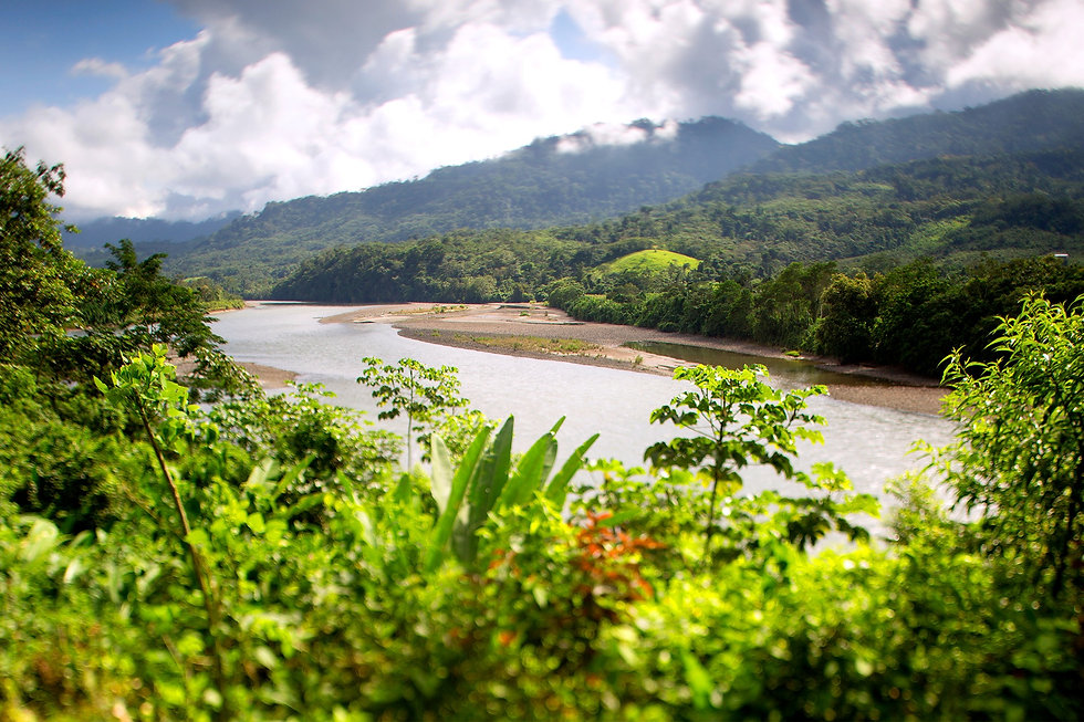 Image of lush rainforest showing green plants in the front and a river and mountains in the back.