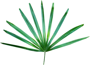 Image of a green palm frond