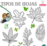 tipos-hojas-actividades-colorear-creando