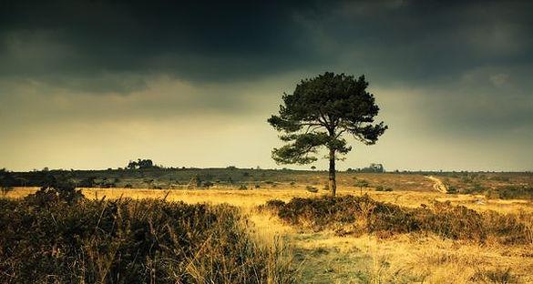 Heath.jpg