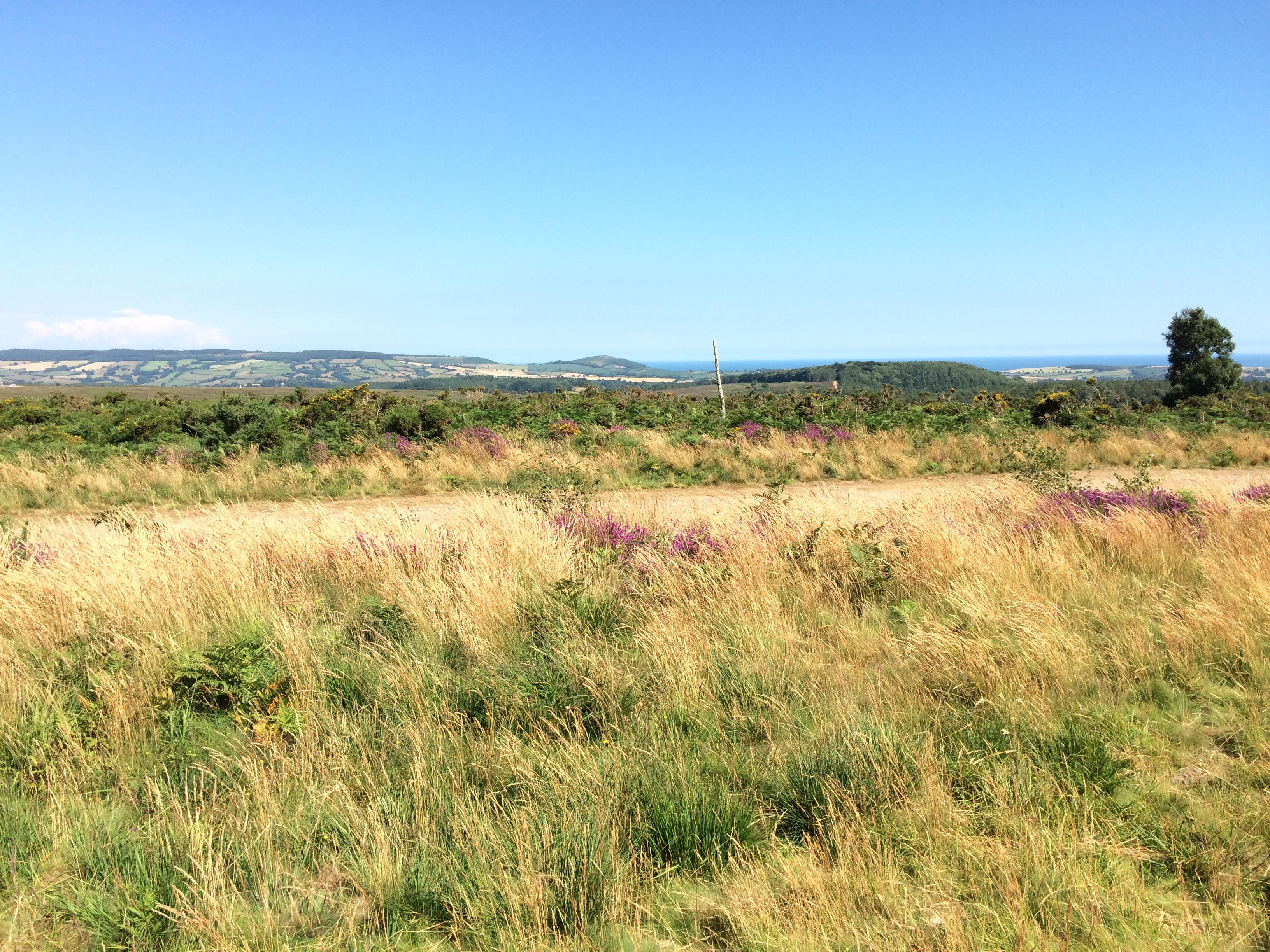 Pebblebed Heaths