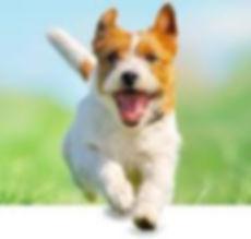 dog images_edited.jpg