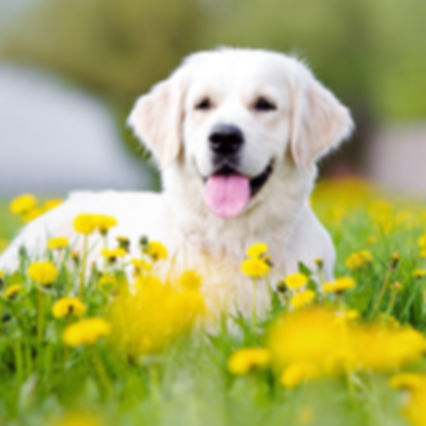 wpid-1 dog flowers.jpg