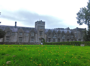 Picnic at Mallow Castle - Sun 14th August Free arts entertainment for all the family