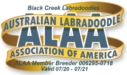 Black Creek ALAA Logo 2020.png