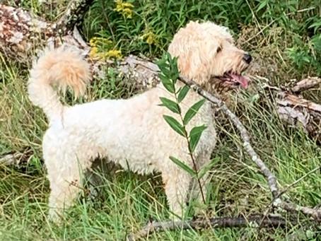Della in the Greens