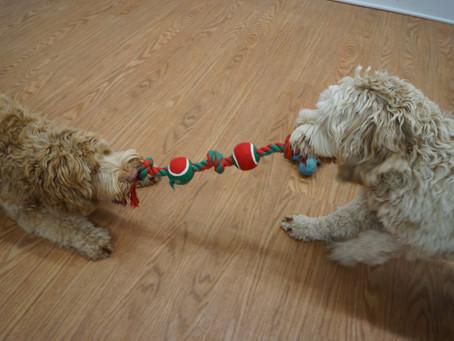 Christmas Toys #2