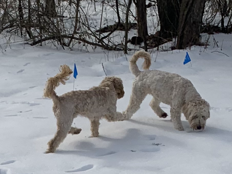 Snow babies Trixie and Della