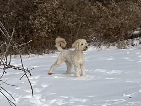 Della in the Snow