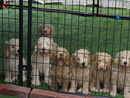 The First Litter Line-up