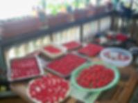 Cherry Season 2018.JPG