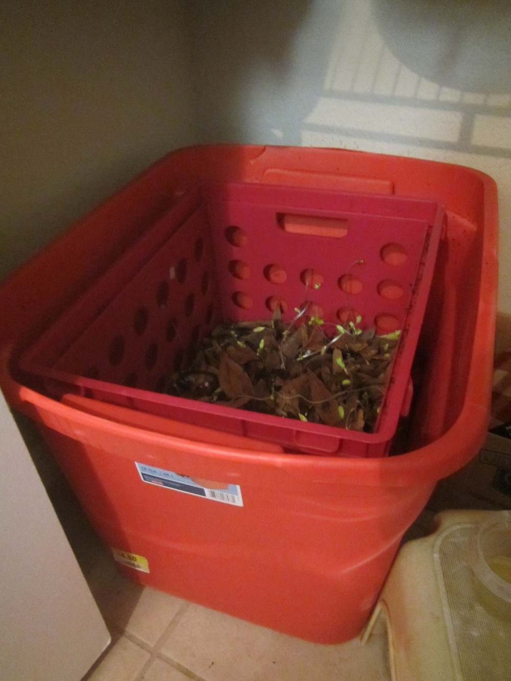My finished compost bin