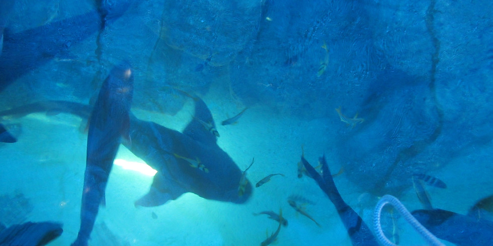 Introduction to Marine Ecology and Enrichment