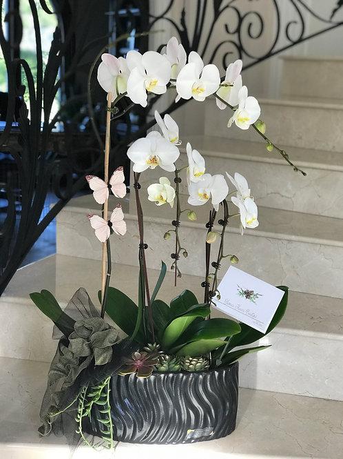 Orchid Arrangement In The Black Ceramic Vase
