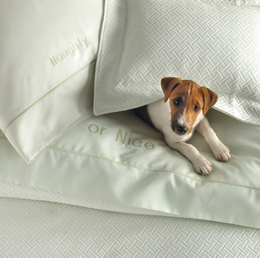Bedding Photography: Puppy dog sitting on Naughty or Nice sage green sheet set for Neiman Marcus.