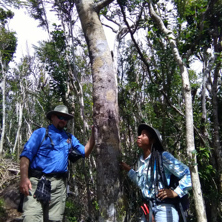 World's first Network of Tropical Important Plant Areas identified