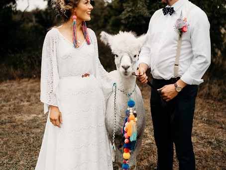 Festival inspired Wedding Shoot with Alpacas!