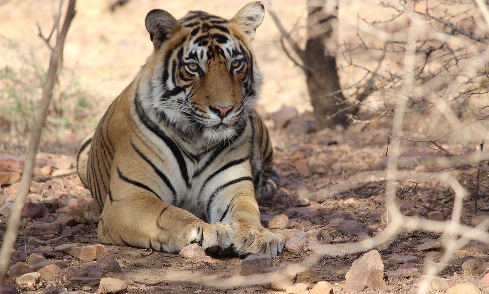 Golden Triangle with wildlife safari at Ranthambore (18 - 28 October, 2020)