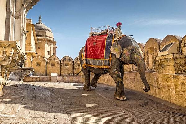 Elephant ride at amber fort.jpg