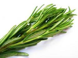 Rosemary Oil Extract (ROE)
