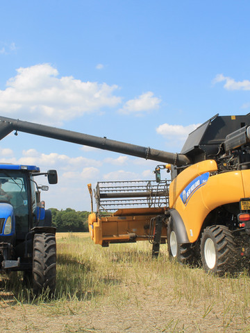 Emptying the Rapeseed into the trailer