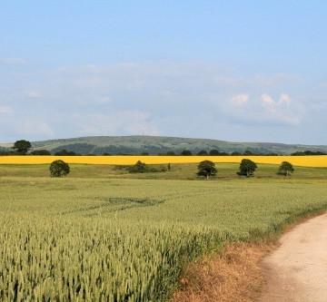 Wheat & Rapeseed fields