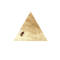 triangle-bee.png