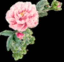 Schirin Chams-Diba Flower