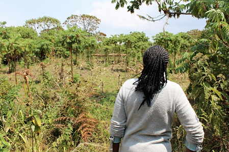 Neema Namadamu, WECAN International Coordinator in the DR Congo, looks out over part of the reforestation project