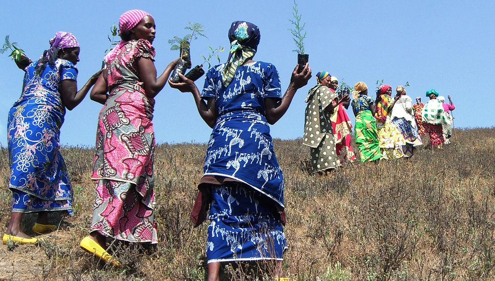 Women of the DR Congo WECAN/SAFECO program walk between the savannah and their tree nursery