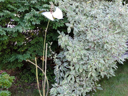 Bonnie's Bloom