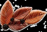 EC.clipart.leaf2.png