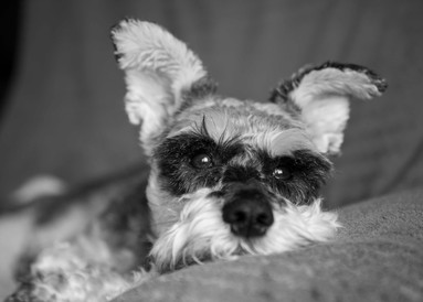 Pet portraits at your home