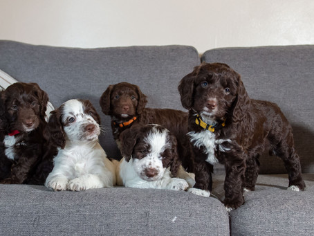 Cute Warning....Puppies
