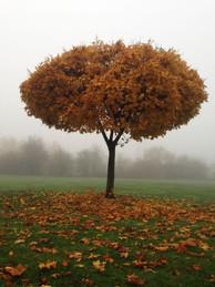 Autumn Tree Derby
