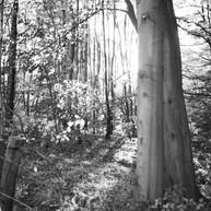 Monochrome side-lit woodland scene
