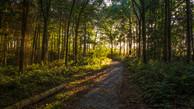 Side-lit woodland scene