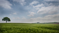 The Wheat Field, North Warwickshire