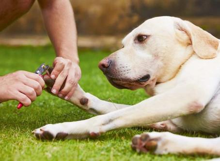Hundekrallen und ihre Pflege