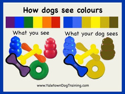 How dogs see colors