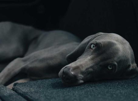 Fünf Gründe, warum Hunde so gesund für uns sind