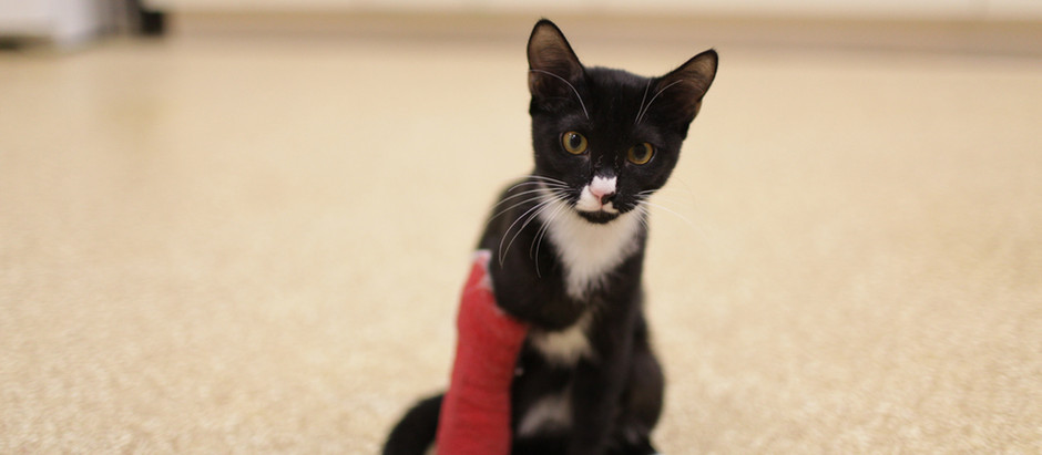 When To Take Your Cat To The ER