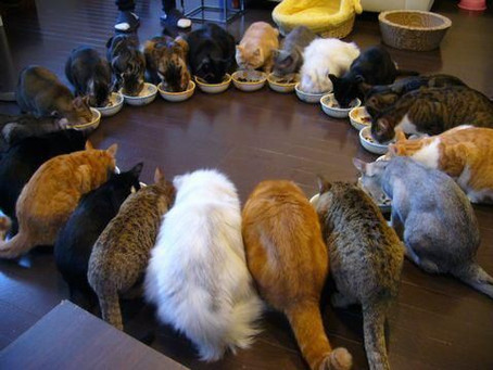 Multiple Cats with Special Diets, Oh My!!!