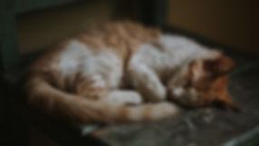 animal-cat-cat-face-799462.jpg