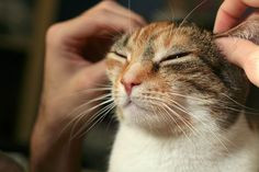 Learn How to Use Acupressure to Relieve Stress in your Pet