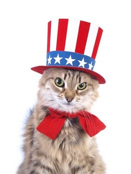 Cat safety tips for Independence Day.