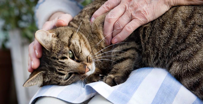 Learn How to Use Acupressure to Relieve Stress in your Pet.