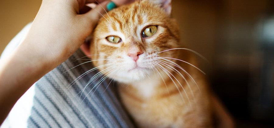 cat-hug.jpg