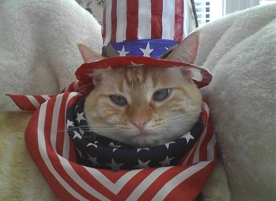 How to Keep Kitty Safe on July 4th